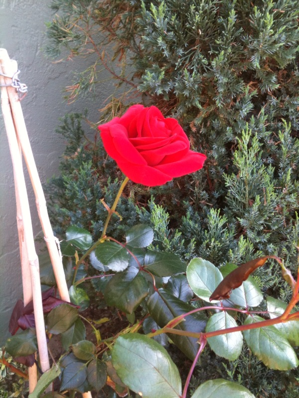 Red climber